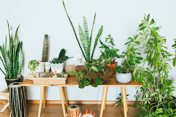 Since the indoor air quality also deteriorates, keeping plants at home can help